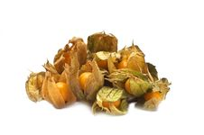 Free Physalis Royalty Free Stock Photo - 9908505