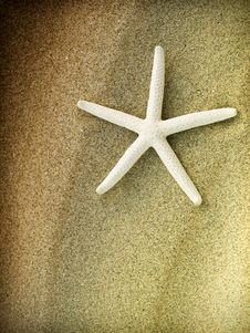 Free Starfish On A Sand Beach Royalty Free Stock Images - 9908529