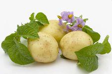 Beautiful Young Potato Stock Photos