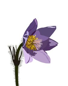 Free Valuable Flower Poniklec Stock Photos - 9909443
