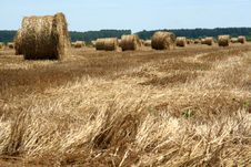Free Hay Bales In The Field Royalty Free Stock Images - 9909849