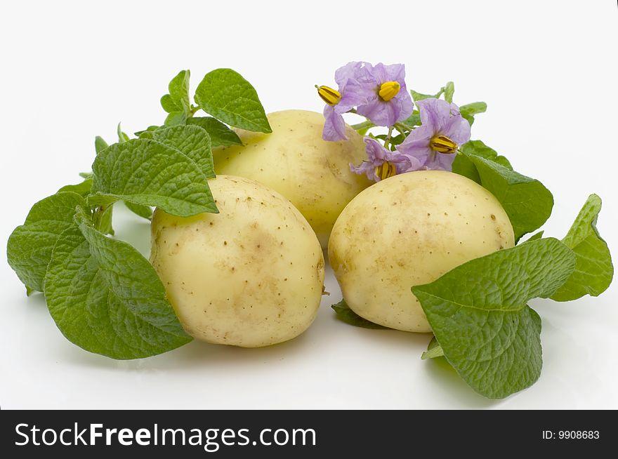 Beautiful young potato