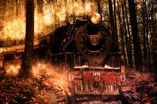 Free Fire, Phenomenon, Forest, Darkness Royalty Free Stock Image - 99000016