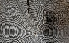 Free Tree, Wood, Line, Texture Stock Photography - 99004712