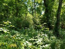 Free Undergrowth, Decatur, Alabama Stock Image - 99031861