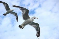 Free Bird, Seabird, Fauna, Sky Stock Photos - 99034123