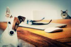 Free Dog, Dog Like Mammal, Snout, Carnivoran Stock Photography - 99036092