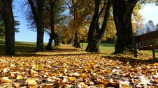 Free Leaf, Autumn, Tree, Yellow Stock Image - 99038891