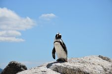 Free Penguin, Flightless Bird, Bird, Sky Royalty Free Stock Photo - 99048665