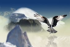 Free Sky, Bird Of Prey, Eagle, Bird Royalty Free Stock Image - 99051696