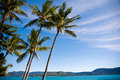 Free Palm Trees On A Tropical Beach Royalty Free Stock Photography - 9911117