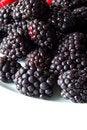 Free Blackberries Royalty Free Stock Photo - 9917725