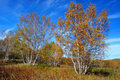 Free Beautiful Autumn Stock Image - 9917981