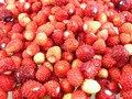 Free Wild Strawberry Stock Photo - 9918430