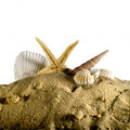 Free Seashell And Seastar On Sand Stock Photography - 9919992