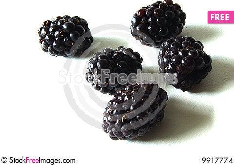 Free Blackberries Stock Images - 9917774