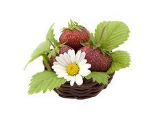 Free Strawberries Stock Photo - 9910070