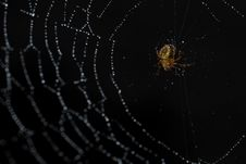 Free Spider In Its Web Covered In Morning Dew Stock Images - 9911114