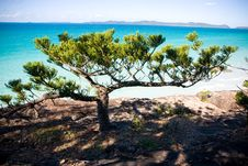 Free Tree On Cliff Over Beach Royalty Free Stock Photography - 9911187