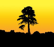 Tall Silhouetted Tree Royalty Free Stock Photo