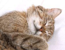 Free Sleeping Cat Stock Image - 9911861