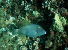 Free Filefish Jaws Stock Image - 9912291