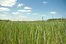 Free Grass Stock Photo - 9912550