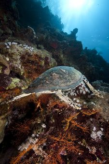 Free Ocean, Sun And Hawksbill Turtle Royalty Free Stock Photography - 9913657