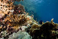 Free Ocean, Sun And Fish Stock Photos - 9913693