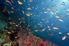 Free Ocean, Sun And Fish Stock Images - 9913864