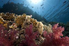 Free Ocean, Sun And Fish Stock Photo - 9913960