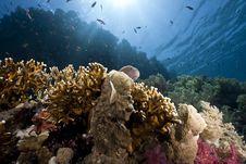 Free Ocean, Sun And Fish Stock Photos - 9913973