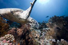 Free Ocean, Sun And Hawksbill Turtle Stock Image - 9914261