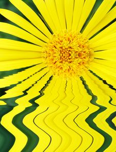 Free Flower Abstract Royalty Free Stock Photography - 9914707