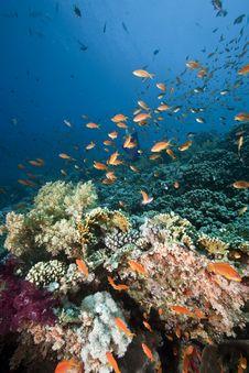 Free Ocean, Sun And Fish Stock Image - 9914921
