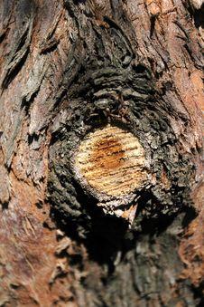 Free Wood Stock Photo - 9915440