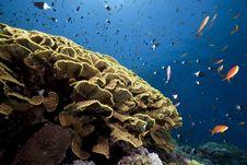 Free Ocean, Sun And Fish Royalty Free Stock Image - 9915816