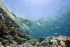 Free Ocean, Sun And Fish Royalty Free Stock Photography - 9916187