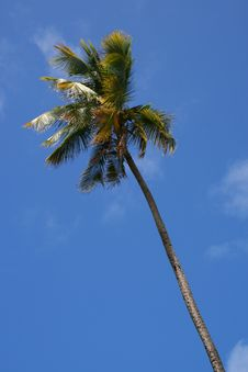 Free Lonely Palm Stock Photo - 9916590