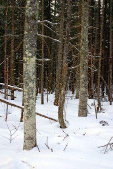 Free Bretton Woods, New Hampshire Royalty Free Stock Image - 9916886