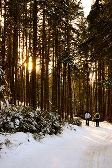 Free Bretton Woods, New Hampshire Stock Photo - 9916960