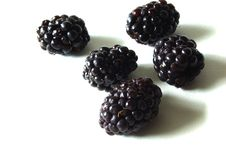 Free Blackberries Stock Images - 9917774