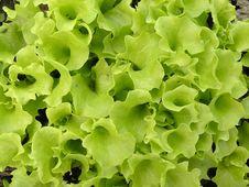 Free Green Salad Stock Photos - 9918663