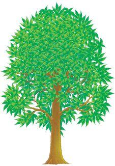 Free Green Tree Royalty Free Stock Photo - 9918665