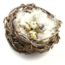Free Quail Eggs In Nest Royalty Free Stock Image - 9918986