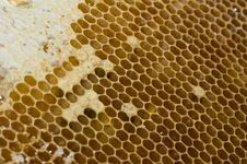Free Honeycombs Royalty Free Stock Photos - 9919328