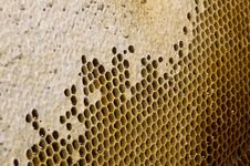 Free Honeycombs Royalty Free Stock Photos - 9919348
