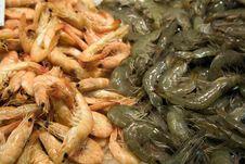 Free Prawns And Shrimps Royalty Free Stock Photos - 9919578