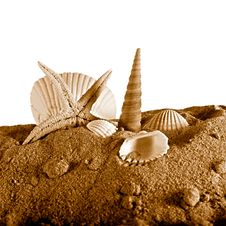Free Seashell And Seastar On Sand Stock Images - 9919964