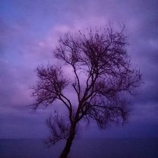 Free Bare Tree In Purple Landscape Royalty Free Stock Photo - 99110295